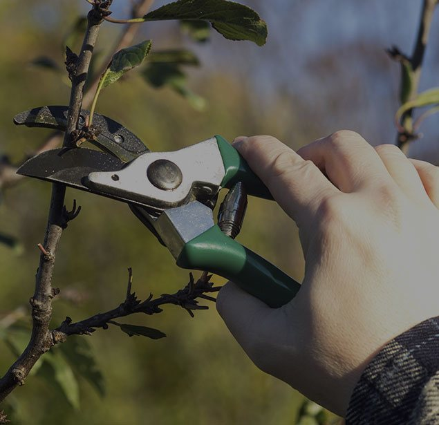 Mo & Sons Tree Care: Tree pruning in Norwalk, Greenwich and Westport