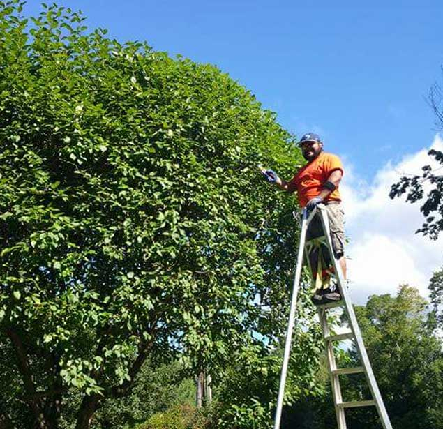 Mo & Sons Tree Care: Tree trimming Norwalk, Greenwich and Westport