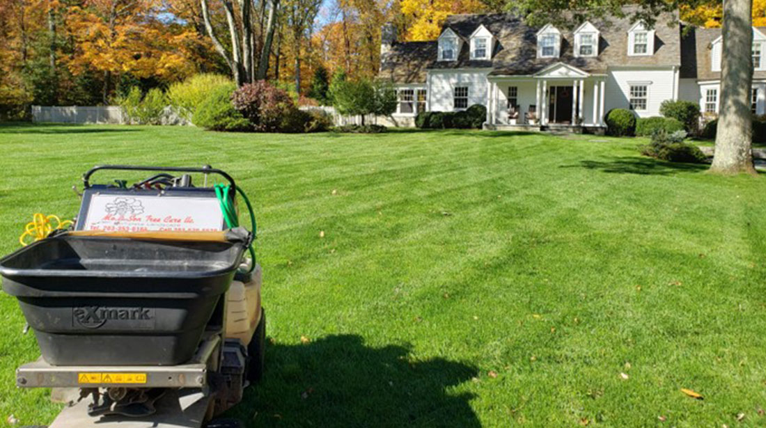 Mo & Sons Tree Care: Emergency tree removal in Norwalk, Greenwich and Westport